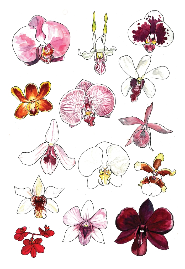 16_Orchids_RGB