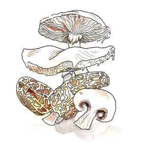 1-Mushroom-White-Background-(For-Web)