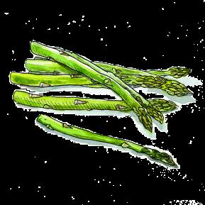 4-Asparagus-White-Background-(For-Web)