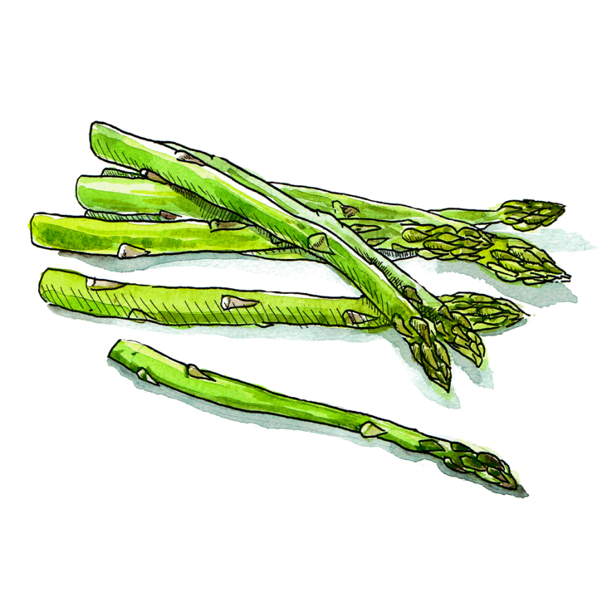 4-Asparagus-White-Background-(For-Web)