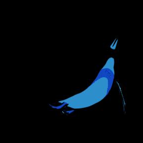 Flying Fish Color_Penguin