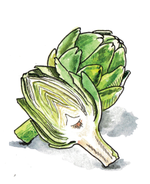 Passover-Illustration-Artichoke