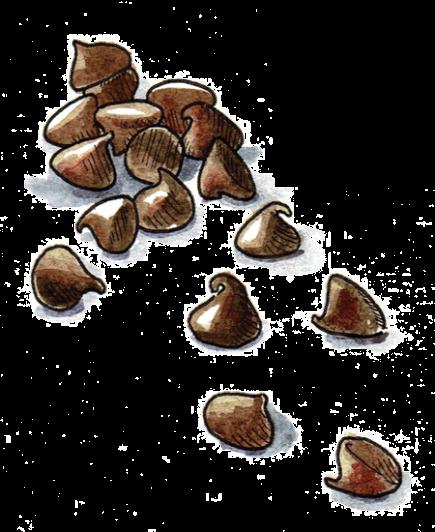Passover-Illustration-Chocolate