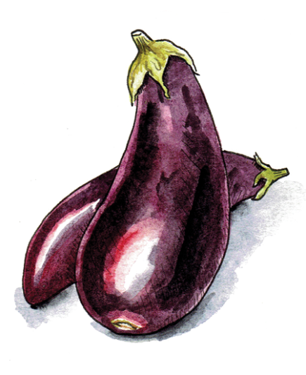 Passover-Illustration-Eggplant