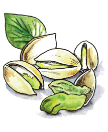 Passover-Illustration-Pistachios