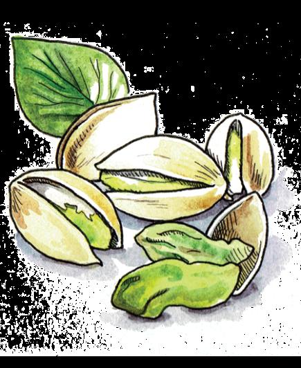 Passover-Illustration-Pistachios